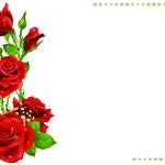 Biglietto auguri con rose
